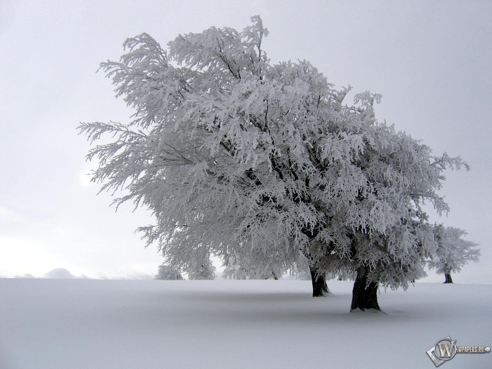 Снег на дереве 1600x1200