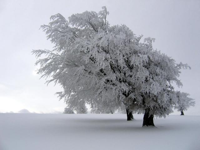 Снег на дереве