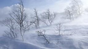 Обои Ветренный зимний день: Зима, Ветер, Вьюга, День, Зима