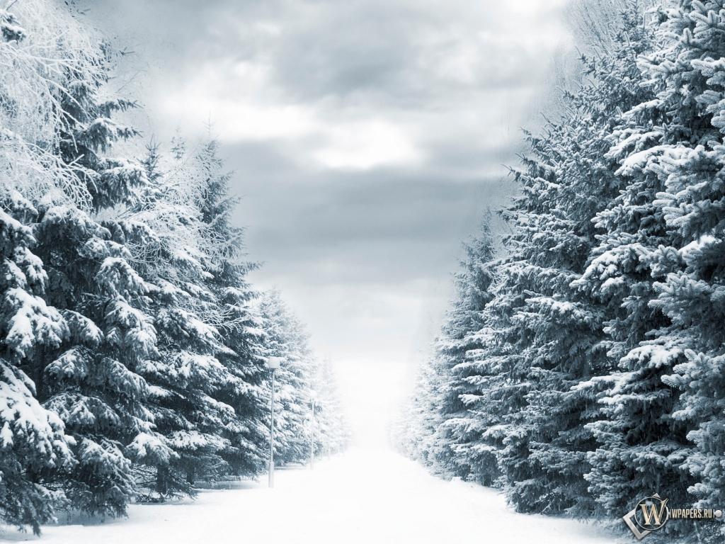 Зимняя аллея 1024x768