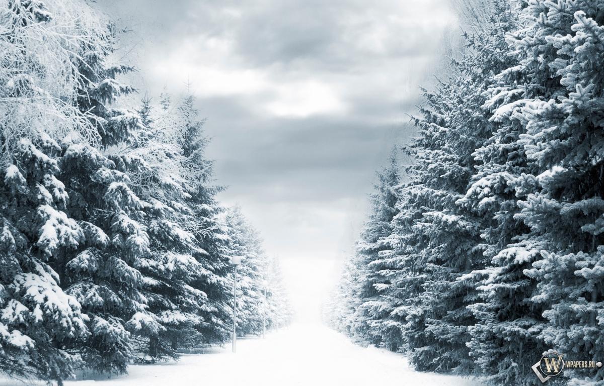 Зимняя аллея 1200x768