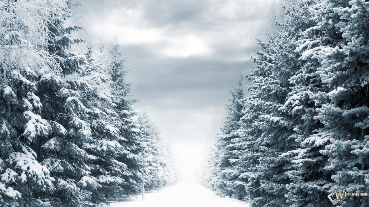 Зимняя аллея 1280x720