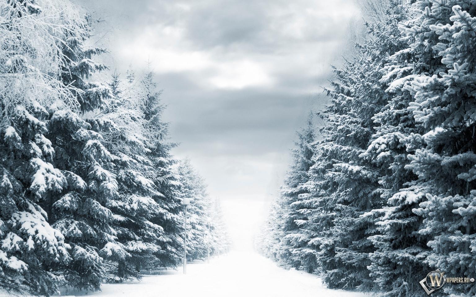 Зимняя аллея 1536x960