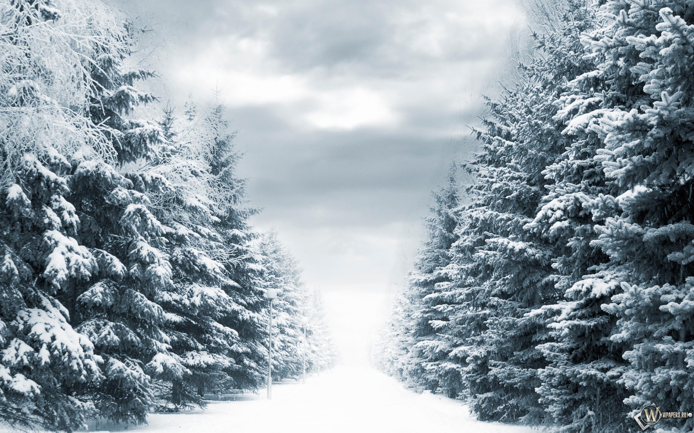 Зимняя аллея 2880x1800