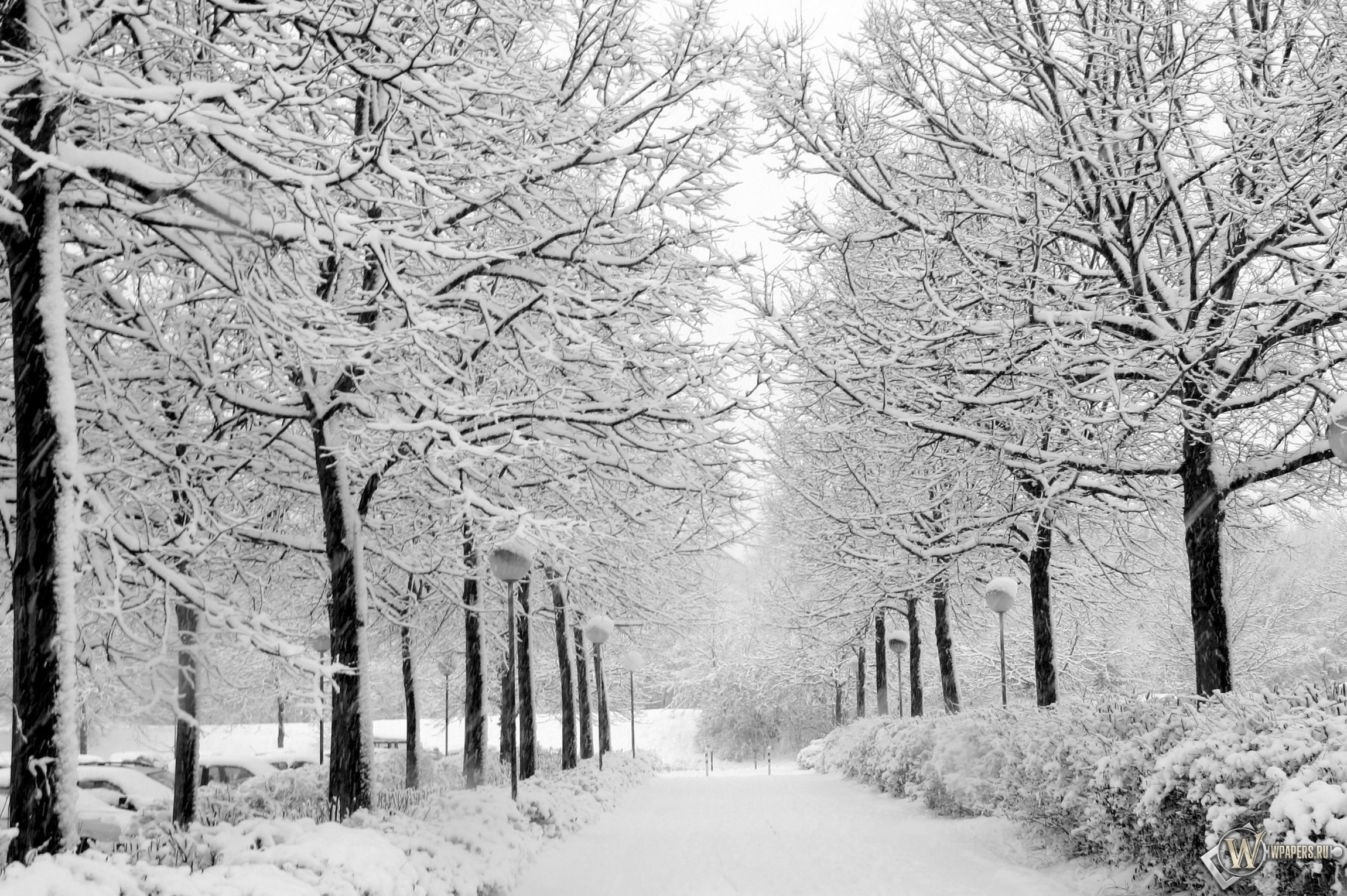 Снежная аллея 2300x1530