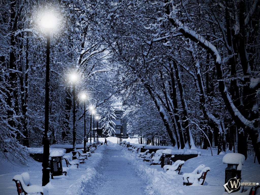 Аллея зимой 1024x768