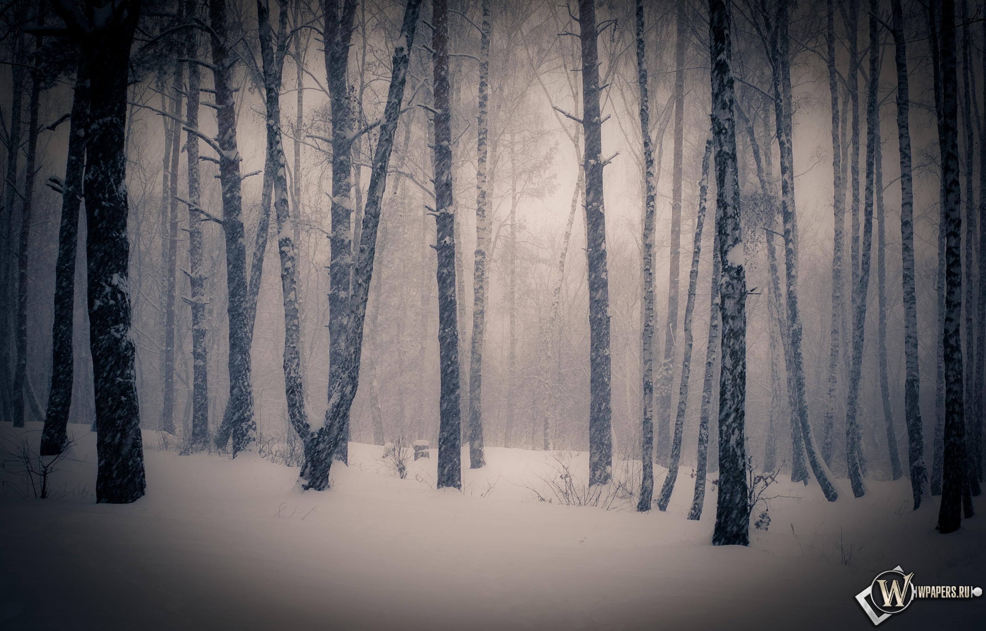 Тишина в зимнем лесу 3200x2048
