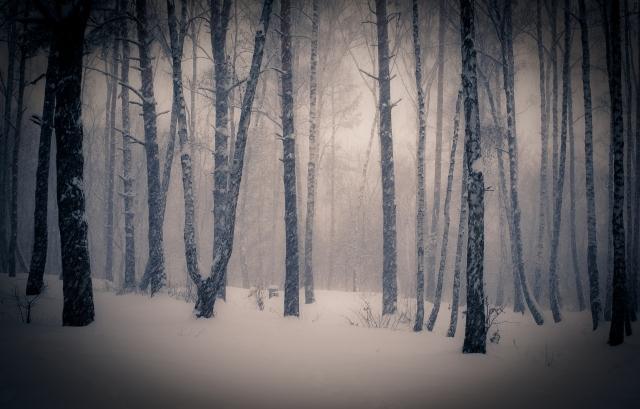 Тишина в зимнем лесу