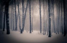 Обои Тишина в зимнем лесу: Снег, Лес, Деревья, Небо, Ветки, Зима