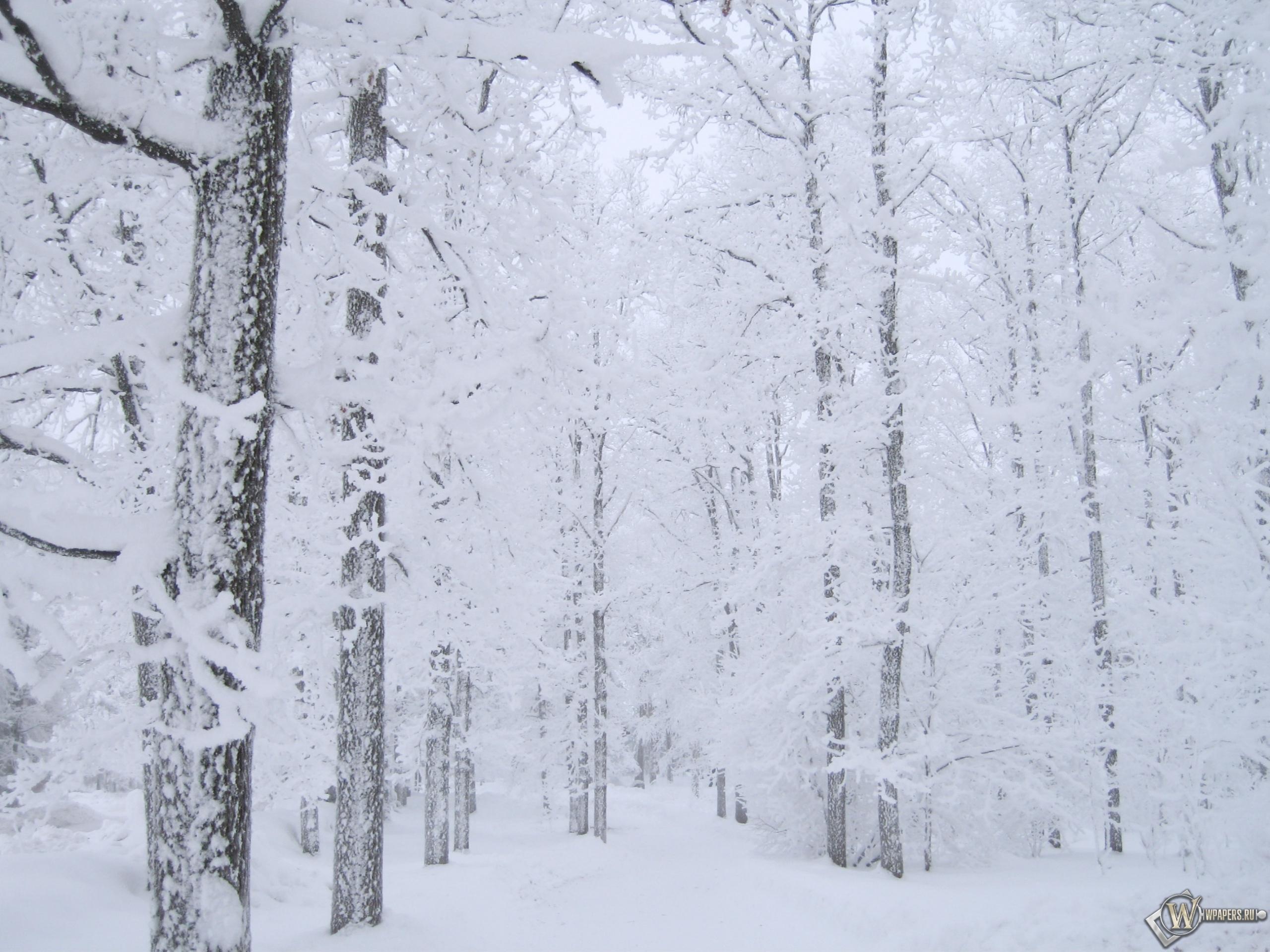 Белоснежный лес 2560x1920