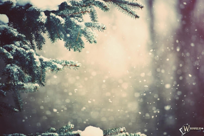 Зимний лес 1500x1000