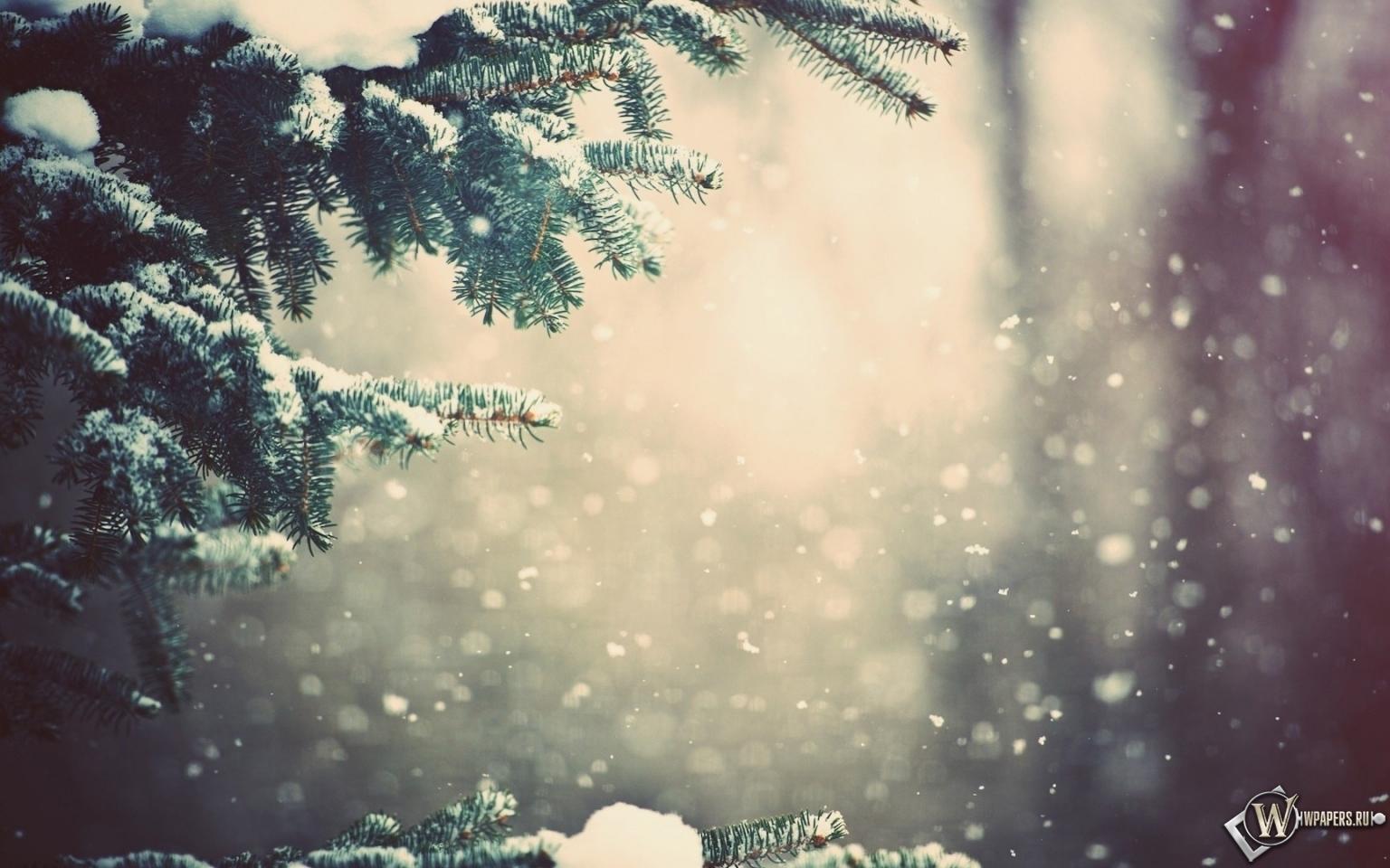 Зимний лес 1536x960