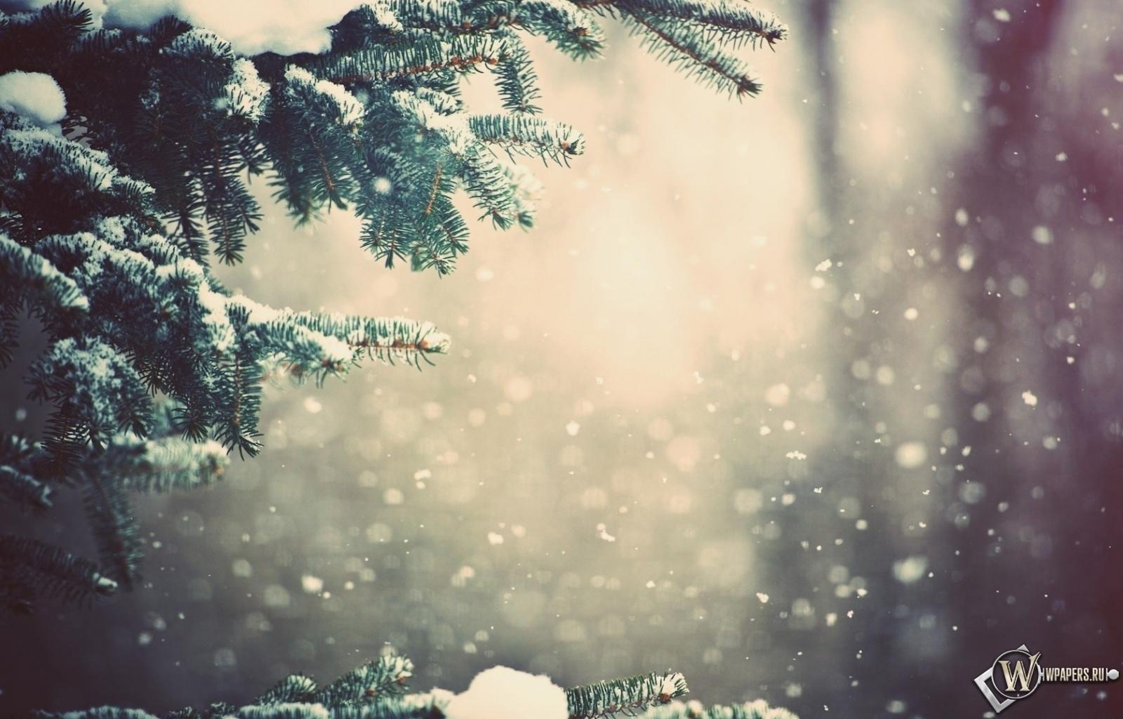 Зимний лес 1600x1024
