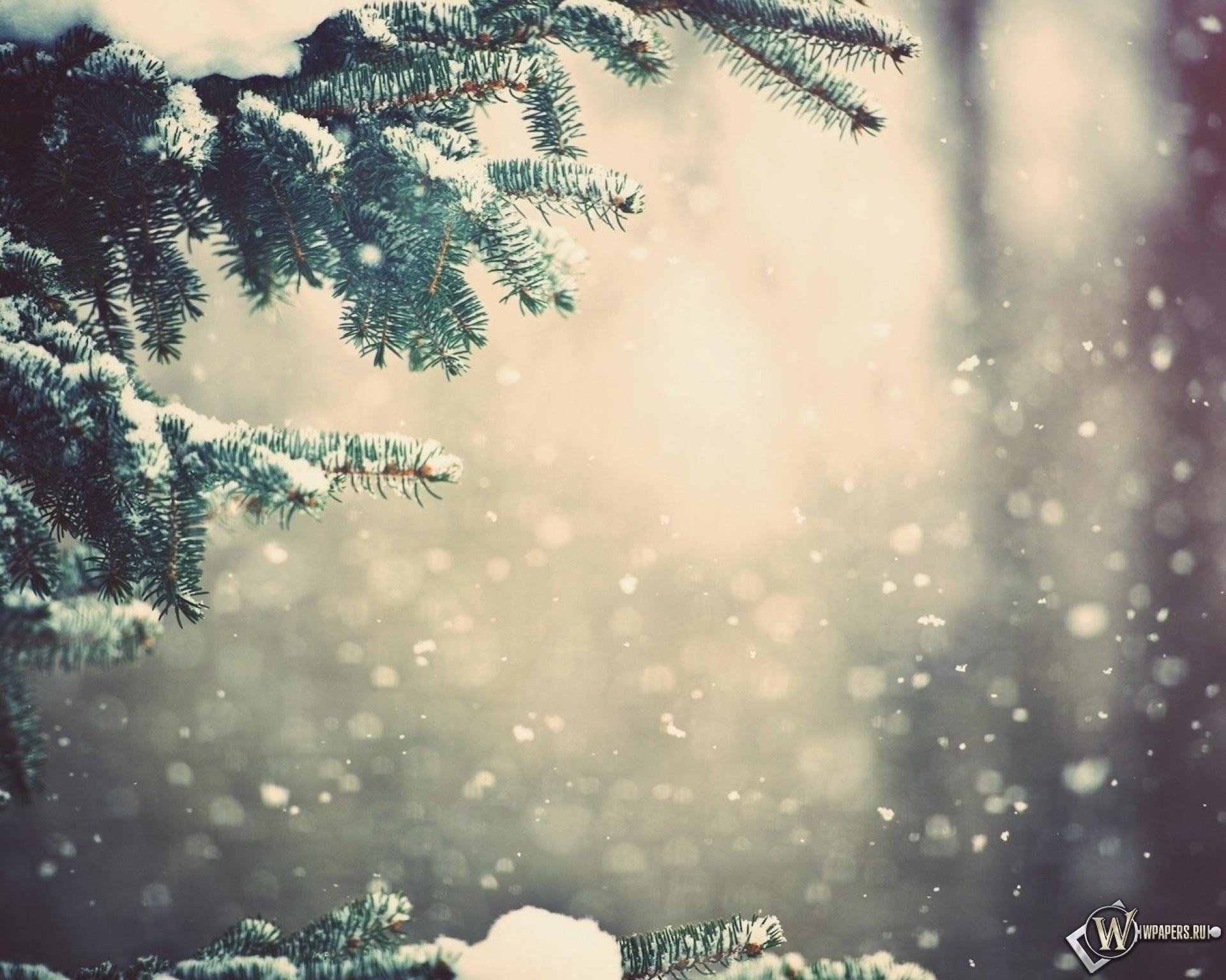 Зимний лес 1920x1536