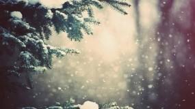 Обои Зимний лес: Зима, Снег, Природа, Ель, Ветка, Зима