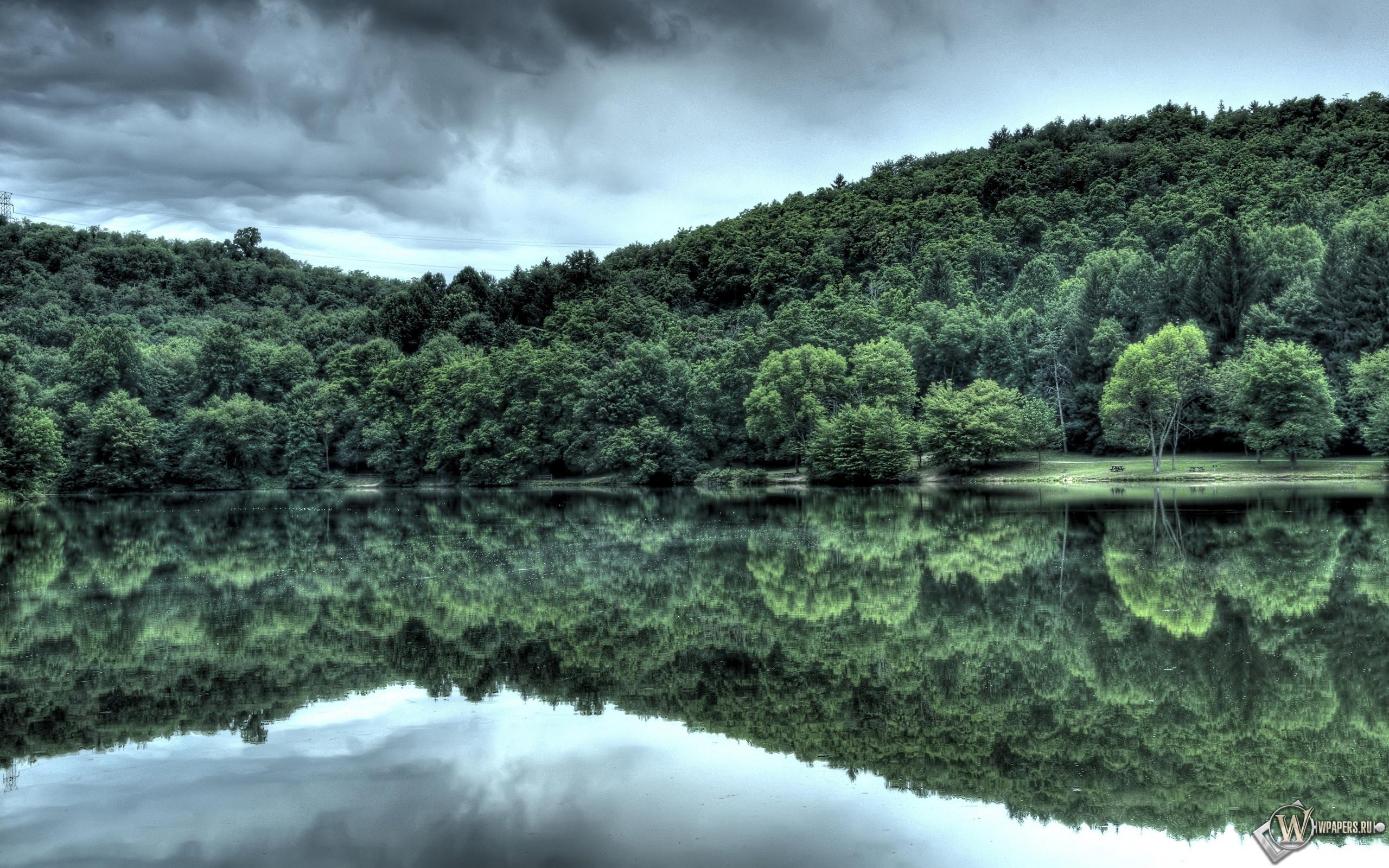 Лес у озера 2560x1600
