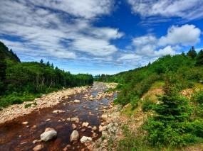 Обои Ручей под голубым небом: Вода, Лес, Деревья, Камни, Небо, Вода и небо