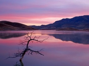 Обои Сиреневое озеро: Отражение, Холмы, Озеро, Небо, Ветка, Вода и небо