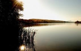 Обои Рассвет на озере: Озеро, Рассвет, Дерево, Куст, Вода и небо