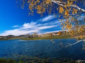 Обои Береза над рекой: Река, Небо, Берёза, Вода и небо