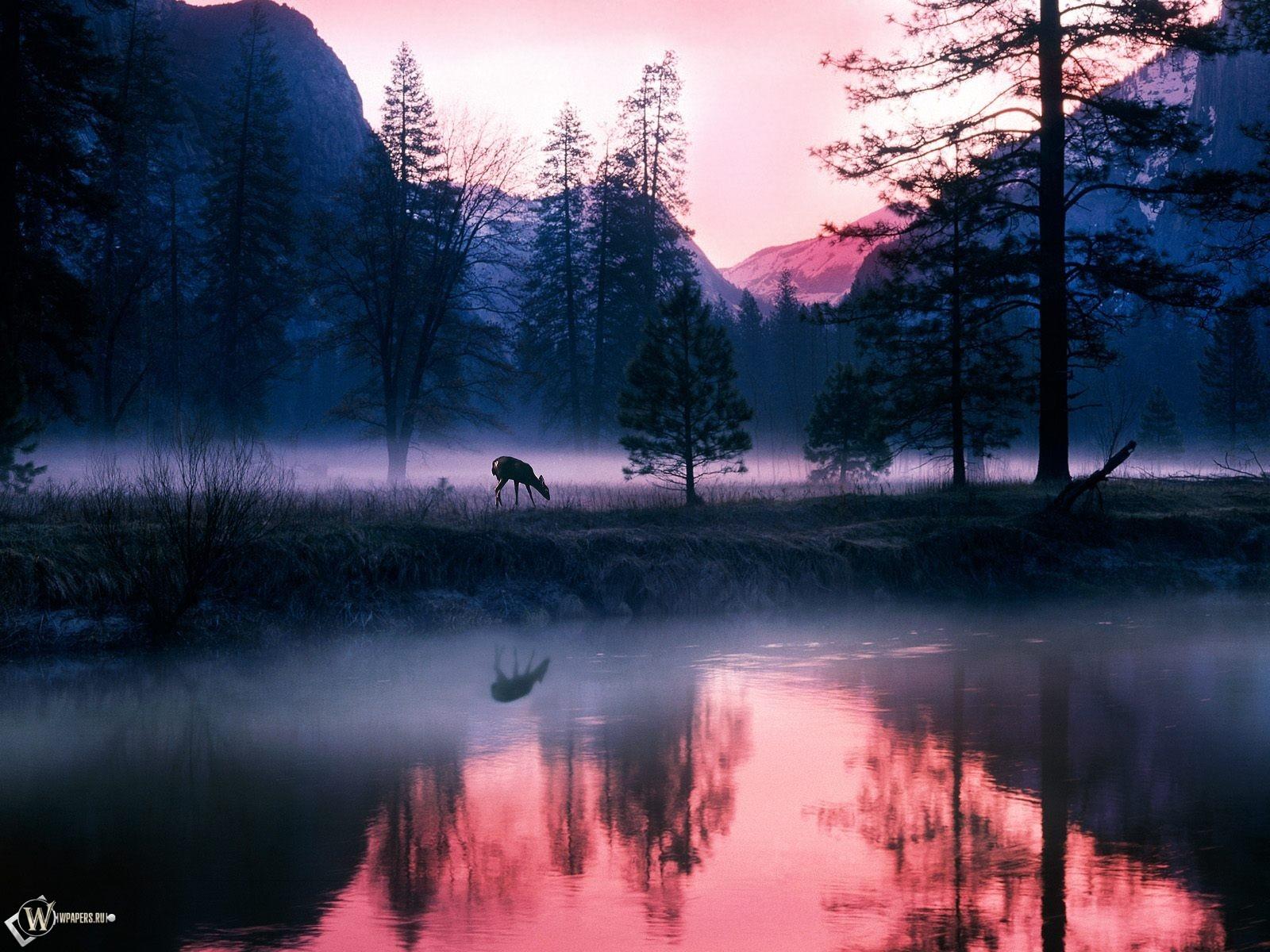 Олененок в утреннем тумане 1600x1200