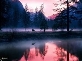 Обои Олененок в утреннем тумане: , Вода и небо