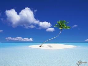 Обои Островок: Остров, Пальма, Кокосы, Мель, Вода и небо